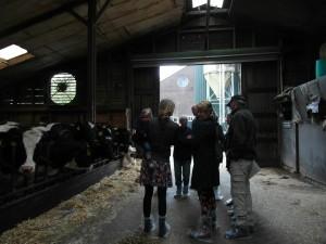 Bij de koeien Bente Maria Els