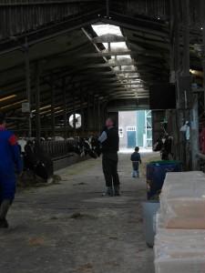 Bij de koeien Lars Kees